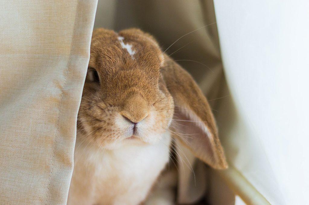 Kaninchen - in Photoshop entwickelt