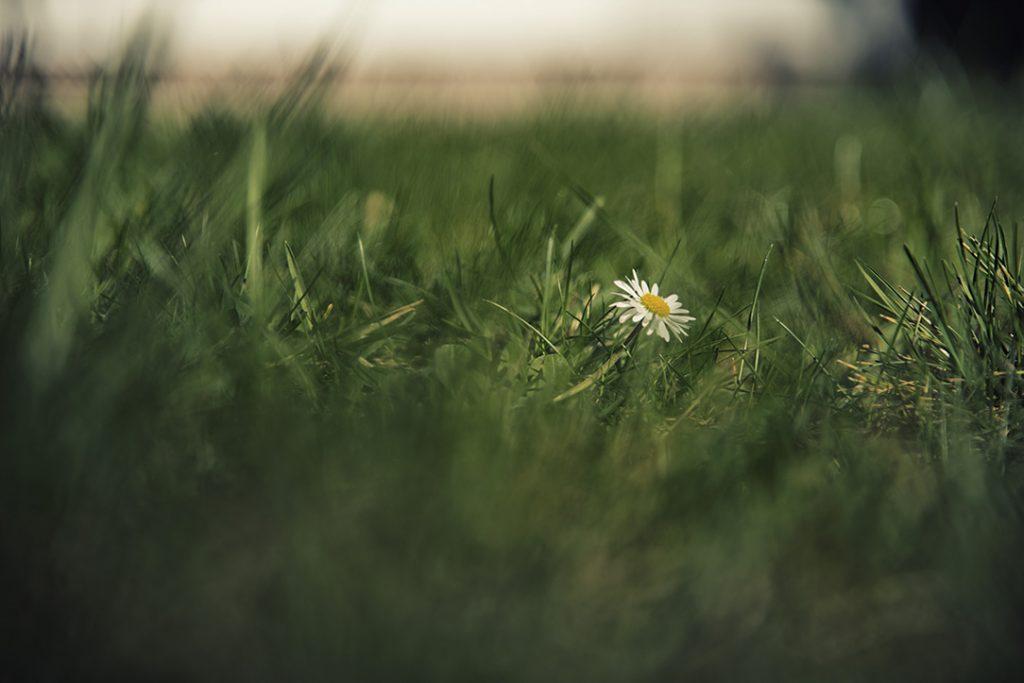 Farbfotografie - Macro: Blume