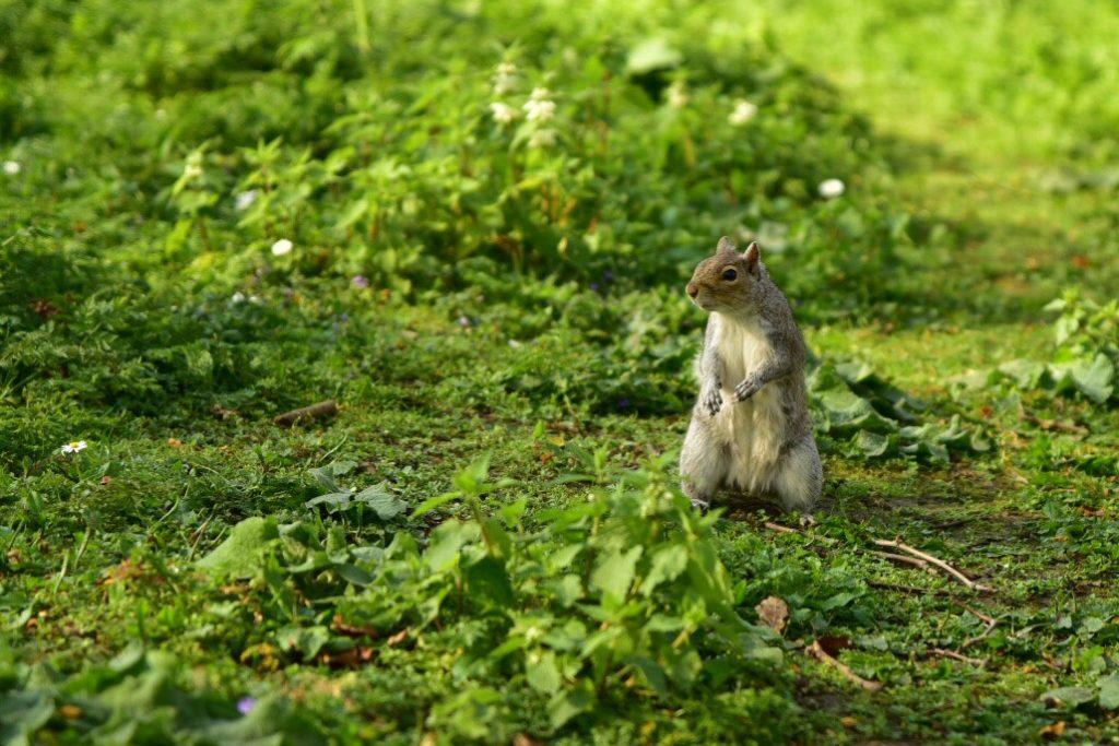 Tierfotografie - Eichhörnchen