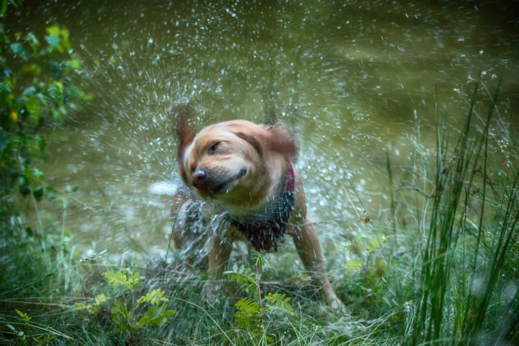 Tierfotografie - Hund nach dem Bad