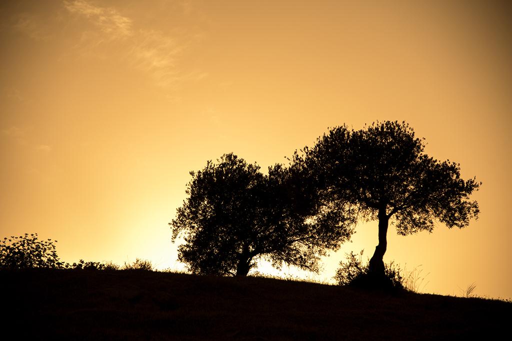 Abbildung 2 - Silhouette im Gegenlicht